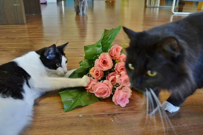 purrlentines day market, lucky cat cafe, annerley, southside, southern suburbs, brisbane, cat cafe, dog friendly, jojo and lola, raffle, charity, twilight, night market, sausage sizzle, market, stalls