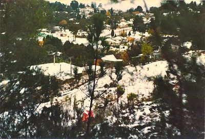 Snowy valley in Leura, Blue Mountains
