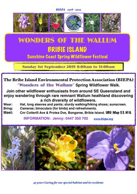 Sunshine Coast Wildflower Festival FREE Guided Walks and Activities, Spring, Mother Nature, nature-filled outdoor, Bribie Island, Noosa National Park, Rainforest Plant Walk, Mary Cairncross Scenic Reserve, Maleny, Explore Scientific Area #1, Glass House Mountains National Park Walk, Beerwah, Isabel Jordan Bushland Reserve Guided Walk, Caloundra, Johns Landing Adventure, Johns Landing Nature Refuge, Cooroibah, Kathleen McArthur Conservation Park Guided Walk, Currimundi, Arthur Harrold Nature Refuge Guided Walk, North Shore Noosa, Tewantin, Keith Royal Park Wildflowers, Marcoola, Mangrove Boardwalk at Weyba Creek, Noosaville, Coolum Beach West Wildflower Walk, Coolum Beach, Coolum & North Shore Coast Care, Surprise at Marcoola, Mt Coolum National Park, Wonders of the Wallum Spring Wildflower, Bribie Island National Park, camera, bookings essential, limited spaces, spring in ones step, blooming outdoor wildflower adventures
