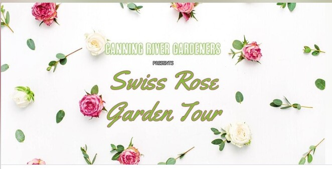 Swiss rose, blooms, cultivate, prune, Canning River Gardeners