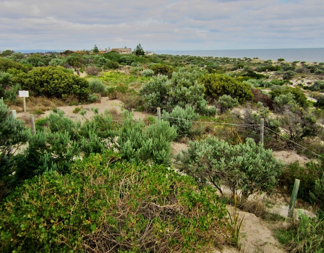 tennyson dunes, tennyson dunes group, tennyson dunes open day, native plants, native wildlife, dunes system, south australia, estcourt house, open day, looking south