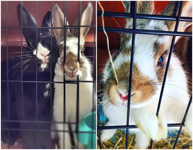 thumper and miss bunny, canberra, gold creek village, nicholls, coffee roasters, morning tea, lunch, tea, best coffee shop