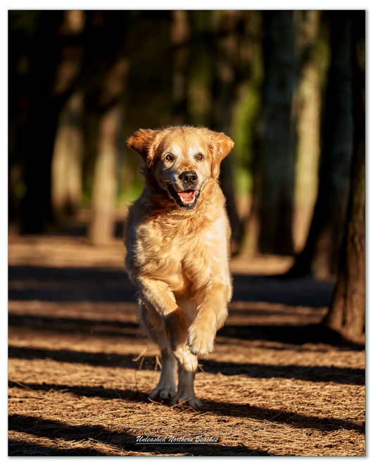 Unleashed Northern Beaches - Fur Art Photography, dog photographer