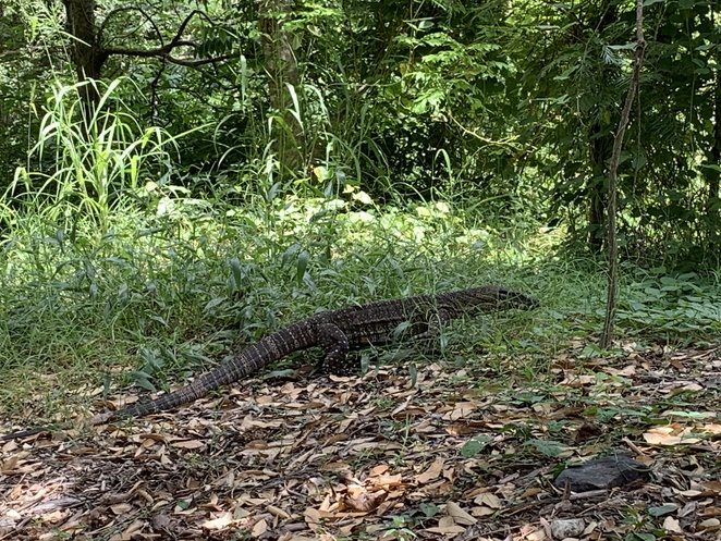 Amamoor Township, Amamoor National Park , Amamoor State Forest, General Store Amamoor, Mary Valley Rattler, Click Clack Cafe, Turntable, Goanna