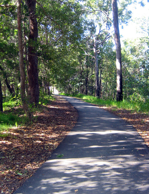 Tree lined path on Bribie Island