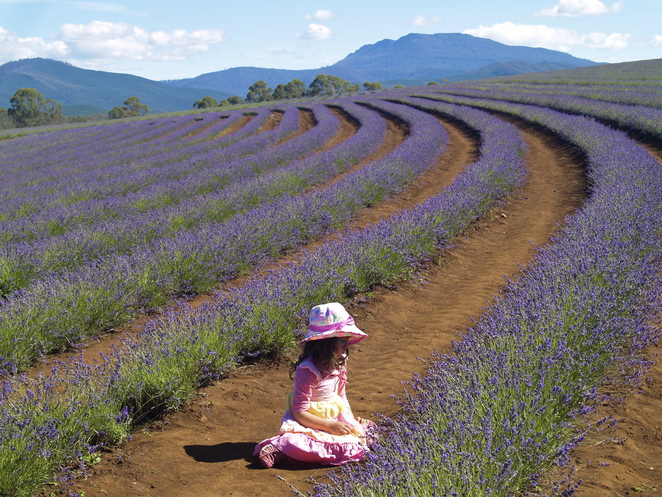 Bridestowe Lavender Farm, Launceston, Tasmania, Best things to do
