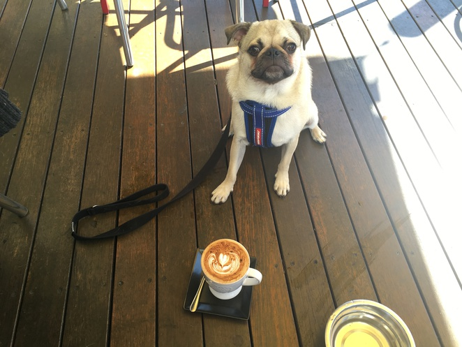 cafe, woofissimo cafe and restaurant, woofissimo, macgregor, sunnybank, brunch, breakfast, dog friendly, dog, dog themed, dog cafe, coffee, brisbane, southern suburbs, eight mile plains