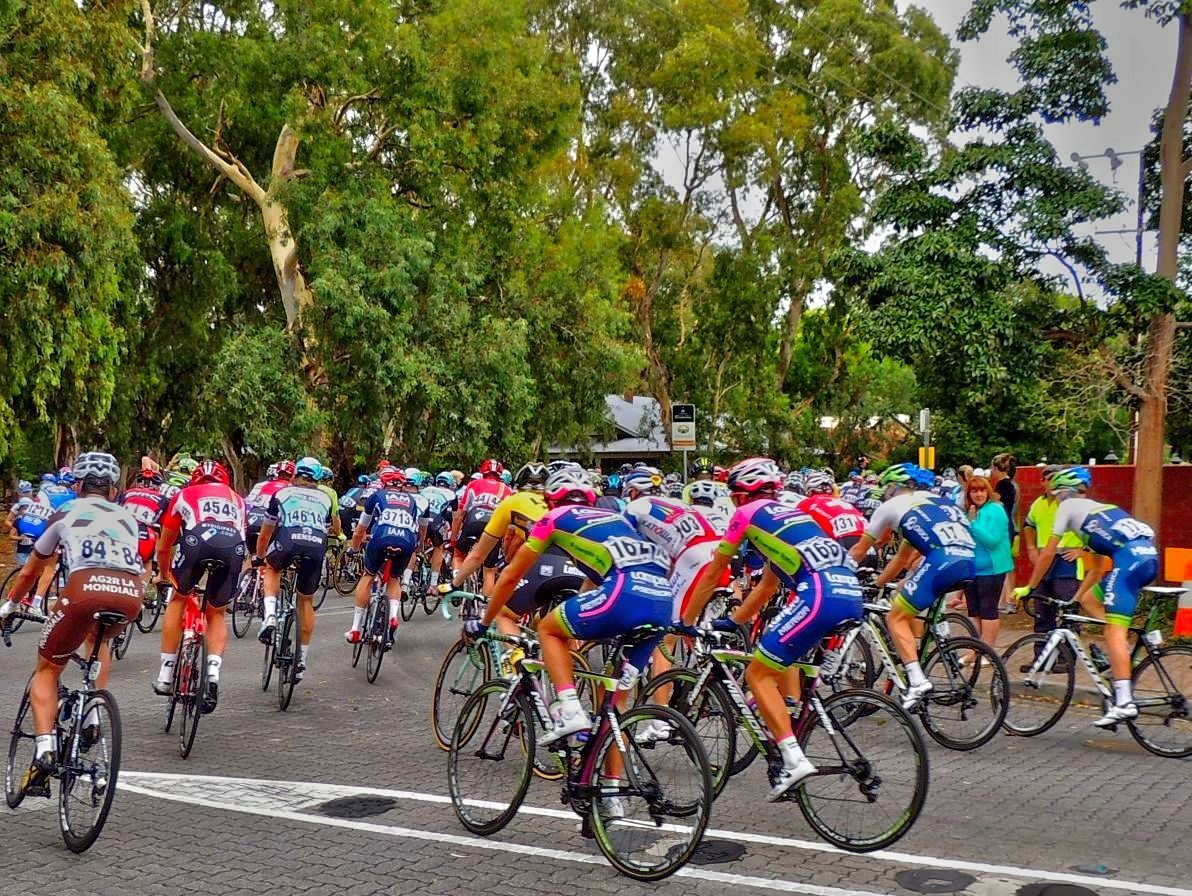 Cycling for Fun in Adelaide - Adelaide