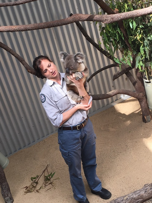 Daisy Hill, Kids, Free, Koala, Eucalyptus Trees, Educational, Wildlife