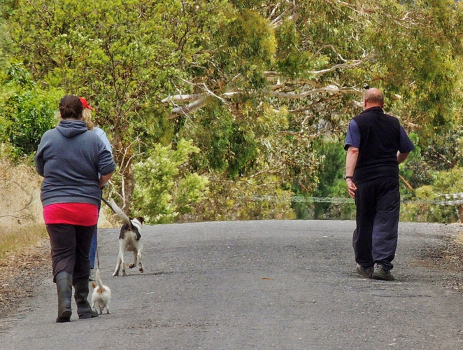 dogs, cats, shelter, no kill, animals, abandoned, abandoned dogs, hahndorf, adelaide hills, pet, volunteers