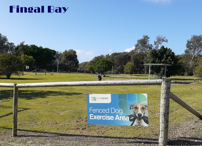 fingal bay, dog exercise area, off leash, dog friendly, walks, dogs, reserves, lead, port stephens, nelson bay, where to go, dog friendly areas, holidaying with dogs, NSW,