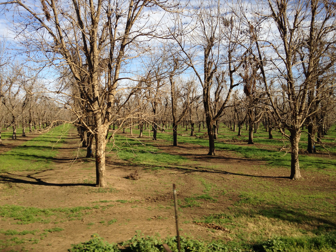 Moree, Tours, Farms, Pecan Nuts, Travel, Things to Do