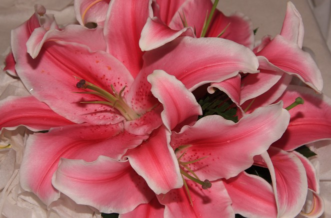 mothers day, 2016, canberra, flowers, where to take mum for mothers day, lunch, breakfast,