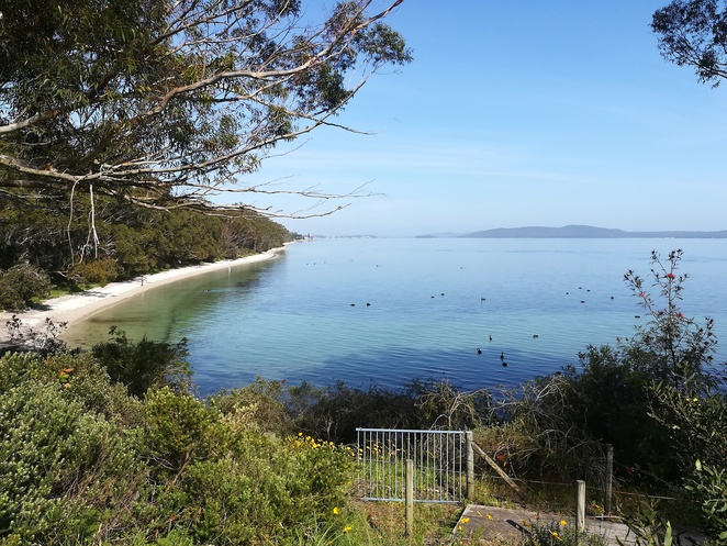 nelson bay, dutchmans beach, walk, coastal walk, bagnalls beach, walking paths, coast walk, port stephens, NSW, best walks, best short walks, easy walks, dog walking, bike riding, cycle paths, views, lookouts, swans, seagrass,