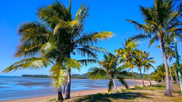 palm trees, seaforth, beach