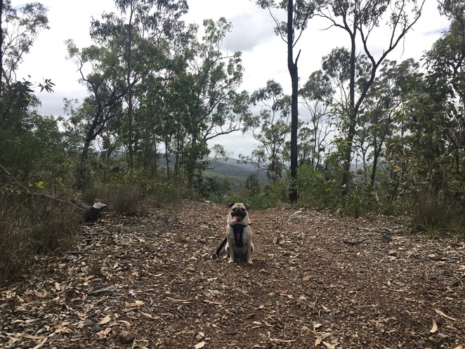 plunkett conservation park, hiking, dog friendly, brisbane, free, lookout, logan, southside
