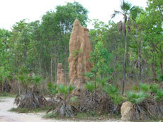 Termite Mounds @ Litchfield Park