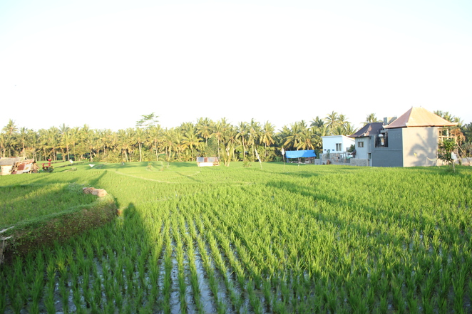Rice fields, Ubud, Bali, holiday
