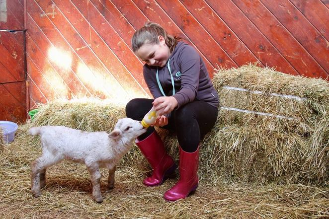 Big goose farm, school holidays, kids, feeding animals