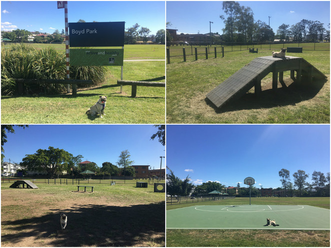 boyd park, fitness circuit, dog park, dog friendly, nundah