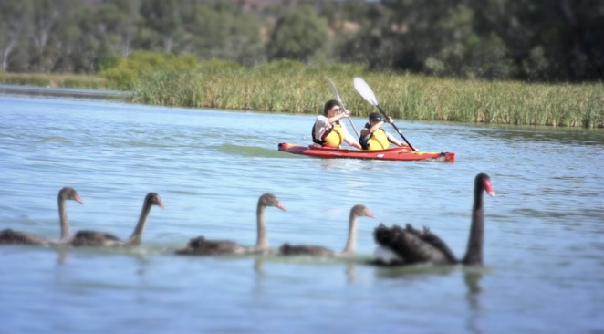 Enjpy the wildlife whilst kayaking along the River Murray