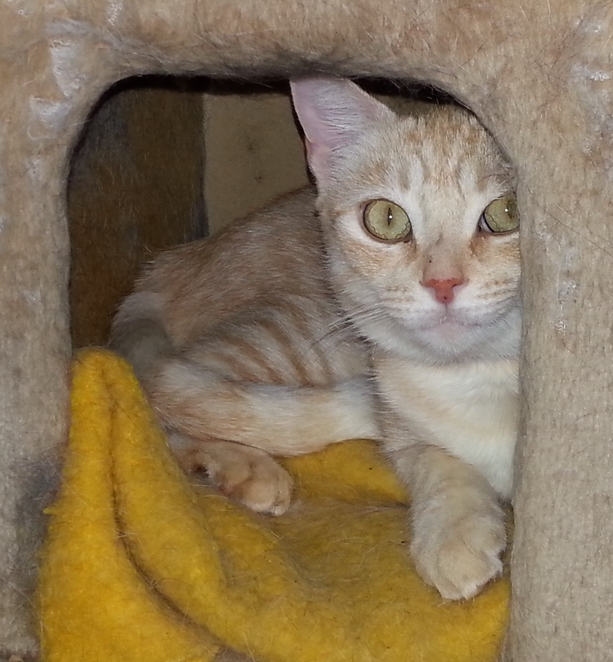 cat protection society adoption donation volunteer pet therapy rescue
