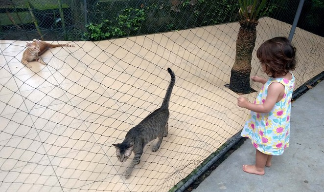 cats in bali