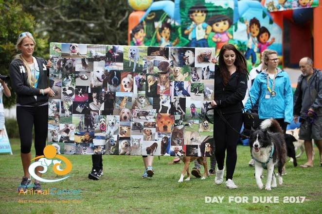 day for duke, Brisbane Showgrounds, dog event, dog friendly, cancer, animal cancer, Australian animal cancer foundation, fundraiser, animal charity, animal rescue, dukey's cause, family fun day, market, fair, pet competitions, entertainment, live music, larrikin puppet show, Natalie mead, teagan Norman