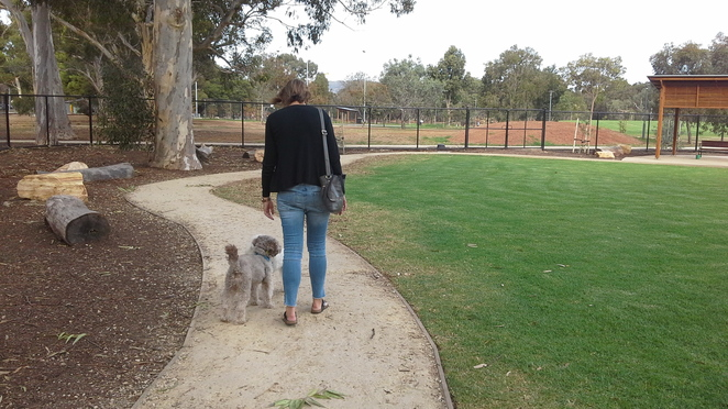 dog and cat laws south australia