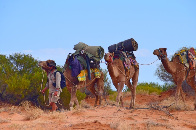 Flinders and Beyond Camel Treks, Heysen Trail, Flinders Ranges, Blinman, Cameleer, Adventure Holidays, Packfree Holidays, Travel with Style