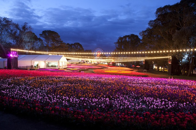 Floriade 2013, NightFest