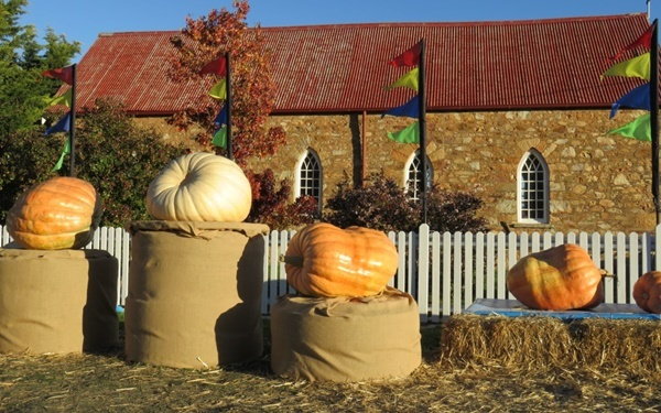 largest,pumpkins,from,last,year