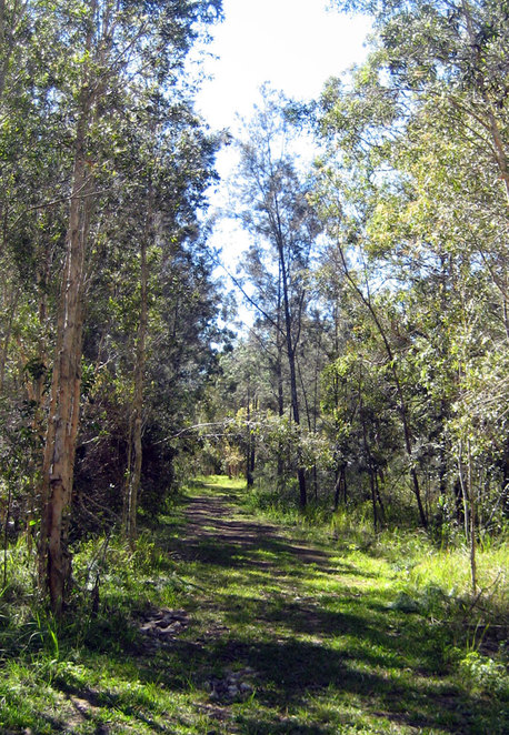 Shady fire trail in the North Lakes Environmental Park