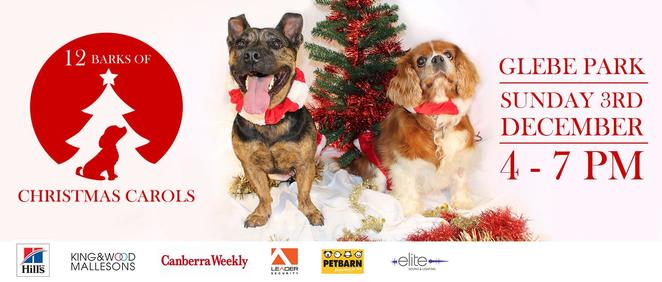 RSPCA, canberra, glebe park, 12 barks of christmas, events for dogs, christmas carols, carol sby candlelight, family events, christmas events, ACT,