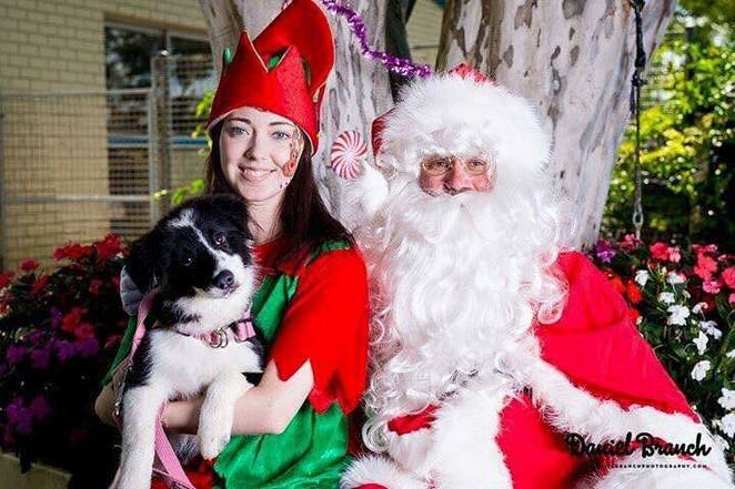 santa paws, Brisbane, redlands, Redlands veterinary clinic, eastern suburbs, dog friendly, dog event, Christmas, fundraiser, beagle club of Queensland, market, hydrobath, bayside pet care, Santa paws Christmas carnival, positive response dog training, live music, raffle, free entry, Santa photos, allira bat stone photography, prizes, competitions, coffee, shaved ice, face painting ,family day