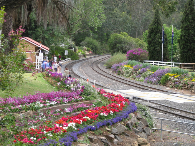 Spring Bluff Railway Station tracks flowers