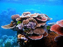 the great barrier reef, coral,