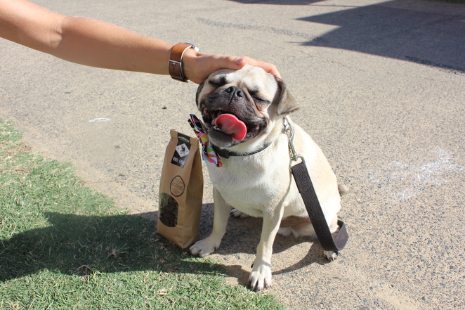 the laughing pug coffee company, coffee, cafe, dog friendly, coffee beans, drippies, convenient, travel, burleigh heads, brisbane, gold coast, coolangatta, markets, small business, pug