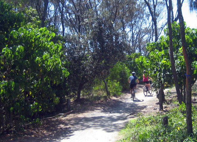 Cyclists heading out to the spit along the sandy bush trails