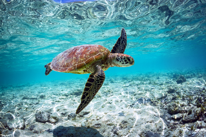 Warren Keelan, Turtle, Save the ocean, planet, Take3 for the Sea, Non-for-profit, help someone in need