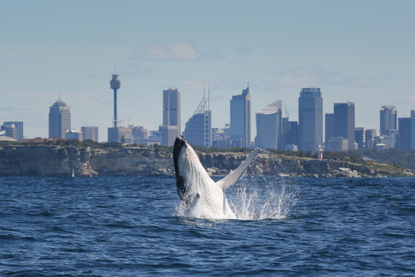 Places to see sydney Top Things