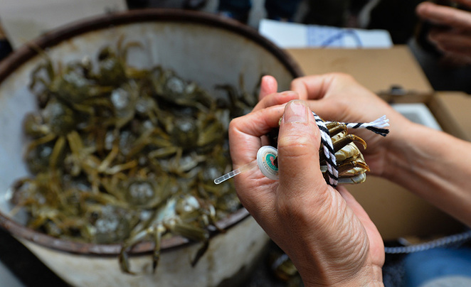 Yangcheng Lake crabs make their way to Beijing
