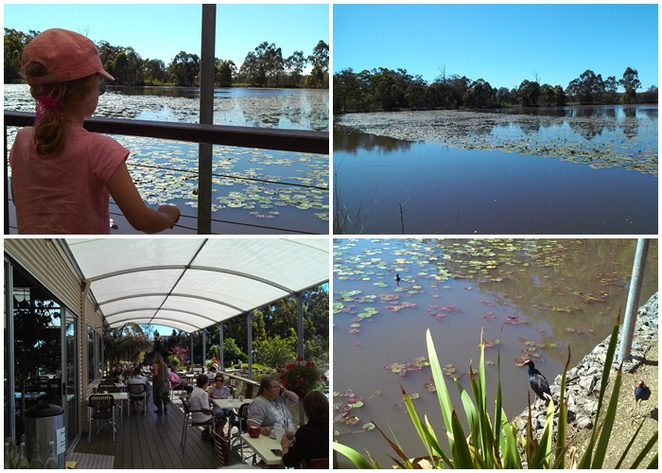 abundance, cafe, plant nursery, sancrox, rawdon island, cafes with views, port macquarie, nsw