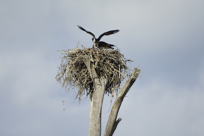 Wildlife such as dolphins and ospreys are some of Amity Point's attractions