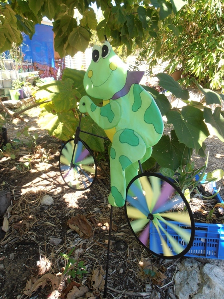 This cute little frog can be seen at the FERN Community Centre.