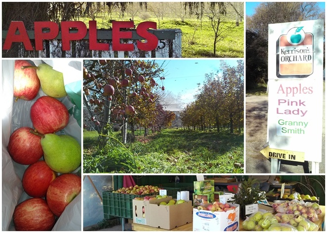kerrisons apple orchard, apples, canberra, pialligo, canberra airport, beltana avenue, fruit bowl, ACT, fresh apples, farmers markets,