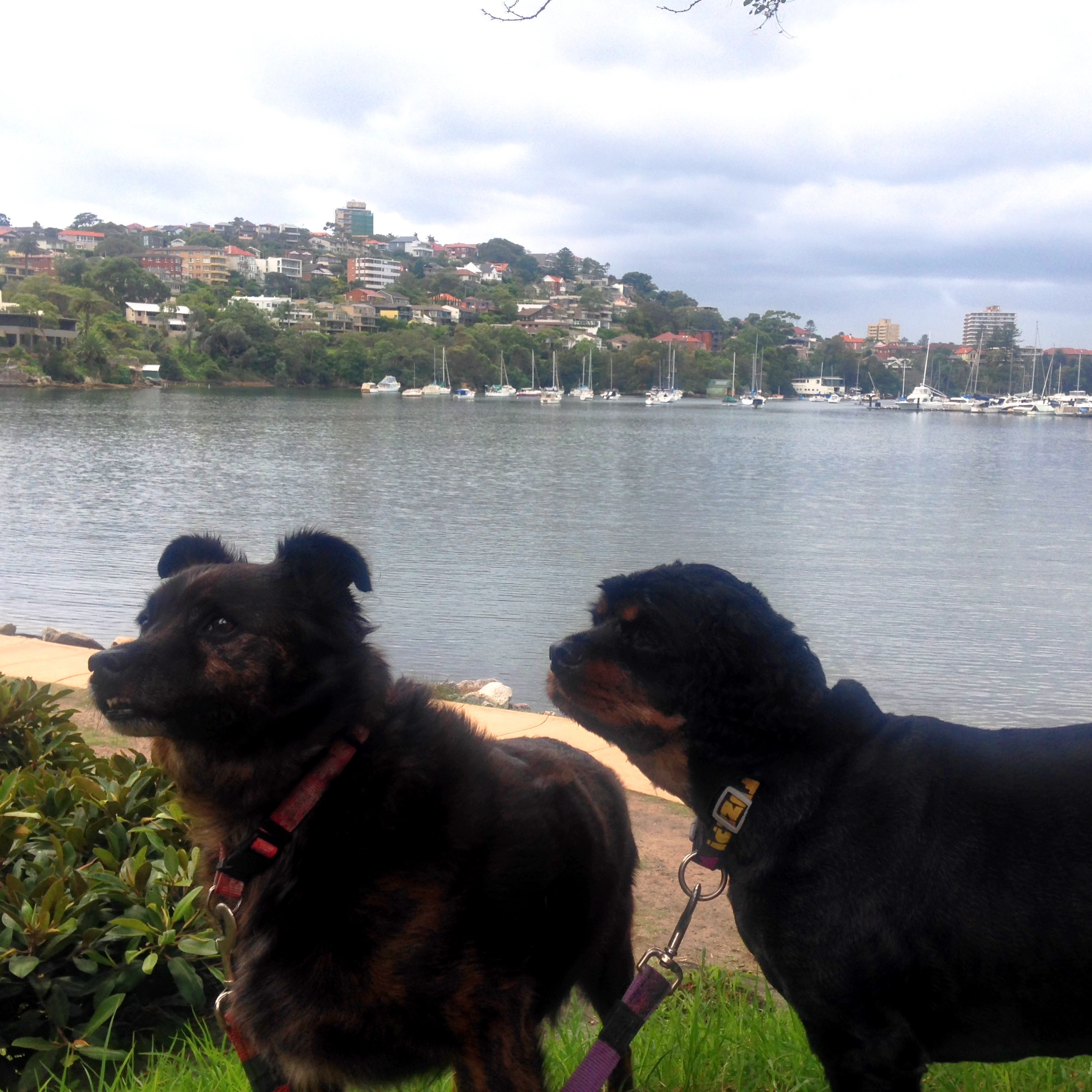 Manly To Spit Walk Dog Friendly