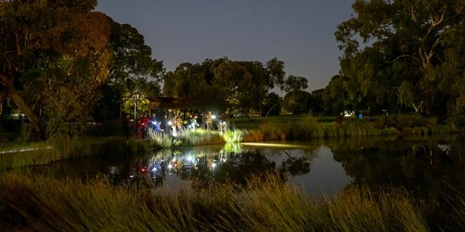 oaklands wetland nature by night, community event, fun things to do, oaklands wetland and reserve, nature festival, guided night walk, green adelaide education officers, city of marion, bats, frogs, adventure, discover something new
