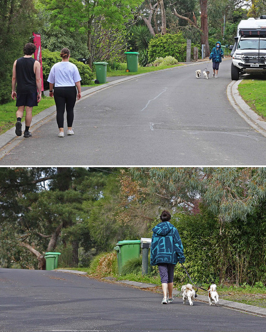 Walkers with dogs.