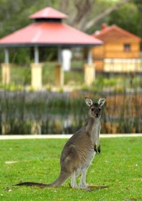 best place to find kangaroos in perth